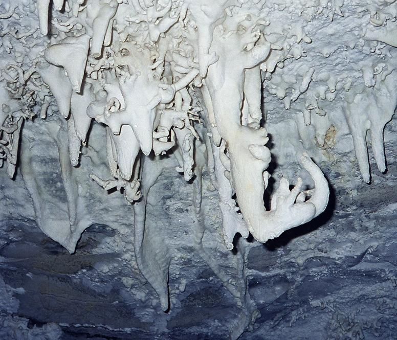 Helictites in the ceiling of Gruta da Torrinha, Chapada Diamantina, Bahia, Brasil.  Image copyright: Renata Shibuta Marques